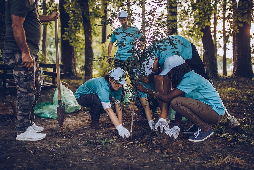 Team planting trees